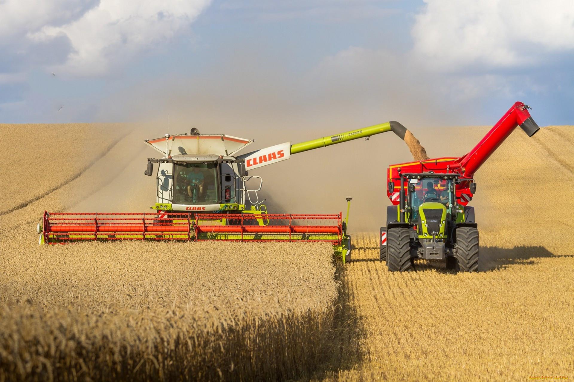 юридический уборка пшеницы комбайнами картинки фото своего